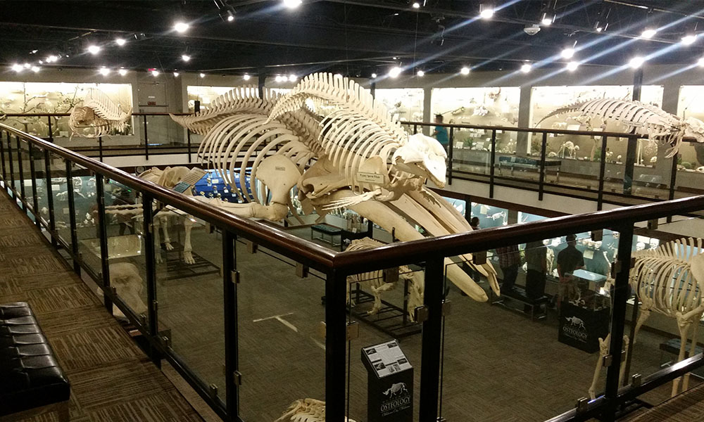 museum-of-osteology-02