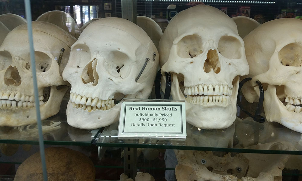 museum-of-osteology-03